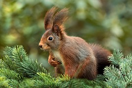 squirrel-619968__180